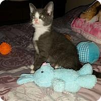 Adopt A Pet :: Puppet - Medford, NJ