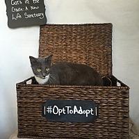 Adopt A Pet :: Charlotte - Mosheim, TN