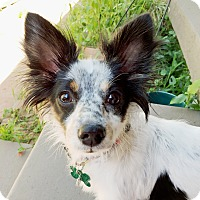 Adopt A Pet :: Lady - Los Angeles, CA