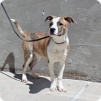 Adopt A Pet :: A14 Kisses - Odessa, TX