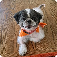 Adopt A Pet :: Mr. Poppy - New York, NY