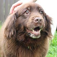 Adopt A Pet :: Mocha - Sparta, NJ