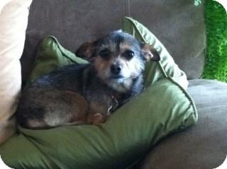 Terrier (Unknown Type, Medium) Mix Dog for adoption in Alpharetta, Georgia - Lexie
