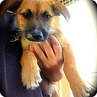 Adopt A Pet :: Mater - Cypress, CA