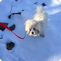 Adopt A Pet :: Que - Wanaque, NJ