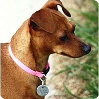 Adopt A Pet :: Samantha - Topeka, KS