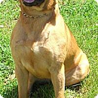 Adopt A Pet :: Yuma - Providence, RI