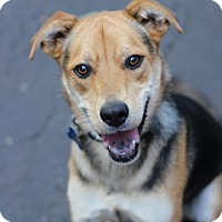 Adopt A Pet :: Shortstop - Port Washington, NY
