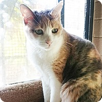 Adopt A Pet :: Amelia - Chino Hills, CA