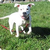 Adopt A Pet :: Pretty Paws - Tillamook, OR