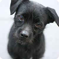 Adopt A Pet :: Blaze - Canoga Park, CA