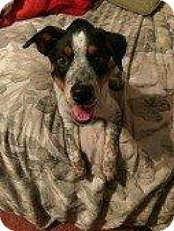 Hound (Unknown Type) Dog for adoption in Hampton, Virginia - BELLA