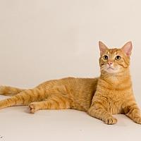 Adopt A Pet :: Archduke Pancakes - St. Louis, MO