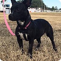 Adopt A Pet :: Dora - Morriston, FL