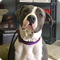 Adopt A Pet :: Wayne~ Courtesy Post - Phoenix, AZ