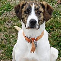 Adopt A Pet :: Deanna - Spartanburg, SC