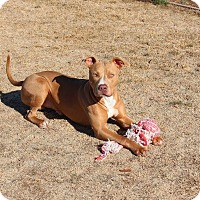 Adopt A Pet :: Abner - Yuba City, CA