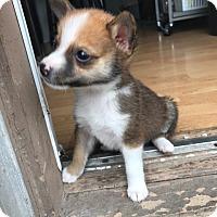 Adopt A Pet :: Tucker - Dallas, TX