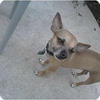 Adopt A Pet :: REMINGTON - Bryan, TX