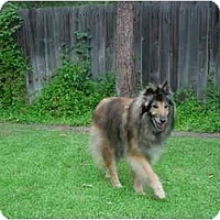 Adopt A Pet :: Misty - Gardena, CA