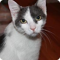 Adopt A Pet :: Sayuri - Plainville, MA
