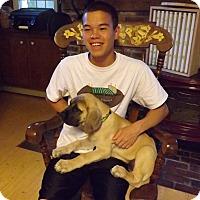 Adopt A Pet :: WALTER - Sudbury, MA