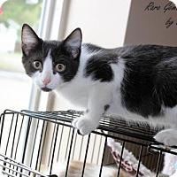 Adopt A Pet :: Rick - Flora, IL