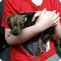 Adopt A Pet :: Radar - Lisbon, OH