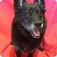 Adopt A Pet :: Skip - Redding, CA