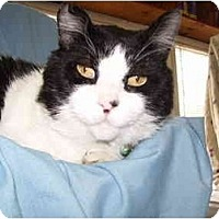 Adopt A Pet :: Grover - Jenkintown, PA