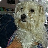 Adopt A Pet :: Oliver - Kingwood, TX