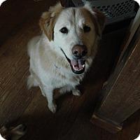 Adopt A Pet :: Ziggy - Staunton, VA
