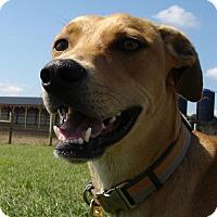 Adopt A Pet :: Baxter - Russellville, KY