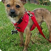Adopt A Pet :: Wiley - Brea, CA