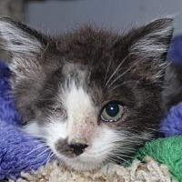 Adopt A Pet :: Gabriel - Louisville, KY