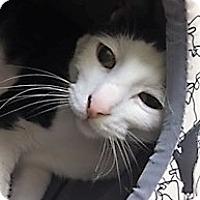 Adopt A Pet :: Finley - Medina, OH