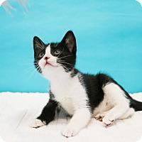 Adopt A Pet :: Zaza - Houston, TX