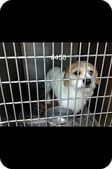 Terrier (Unknown Type, Small) Mix Dog for adoption in Lancaster, Ohio - Benji