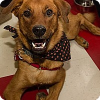 Adopt A Pet :: Dewey - Saskatoon, SK