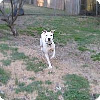 Adopt A Pet :: Viper - Chattanooga, TN