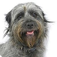 Adopt A Pet :: Melody - Mocksville, NC