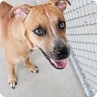 Adopt A Pet :: Estelle - Hancock, MI