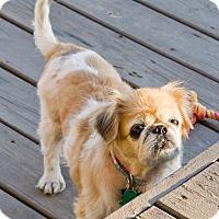 Adopt A Pet :: Maizie - Virginia Beach, VA