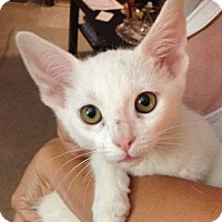Adopt A Pet :: Bosko - North Highlands, CA