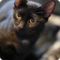 Adopt A Pet :: Ruby - N. Billerica, MA