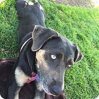 Adopt A Pet :: Luna - Studio City, CA