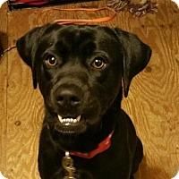 Adopt A Pet :: Jax - PENDING - Akron, OH