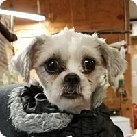Adopt A Pet :: Gypsy - San Antonio, TX