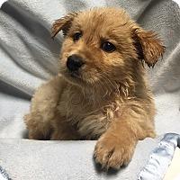 Adopt A Pet :: Butter - Hagerstown, MD