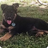 Adopt A Pet :: Arcade - Modesto, CA